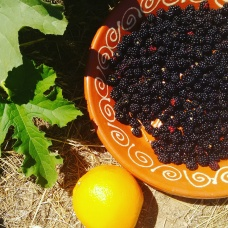 harvesting wild blackberries and storing as much as possible