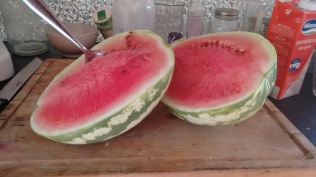 melon form the garden
