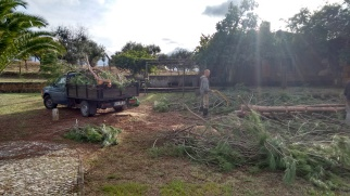 pinetree cleanup