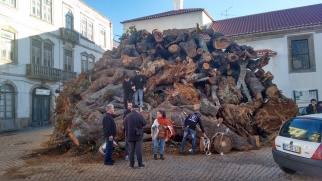 preparing for the christmas bonfire in penamacor