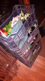 preparing veg boxes to sell
